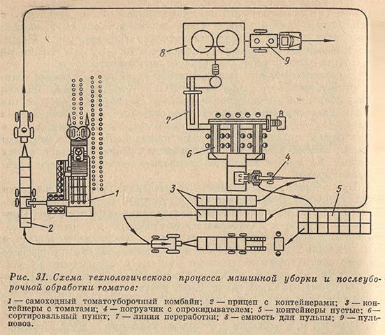 Схема технологического процесса машинной уборки и послеуборочной обработки томатов
