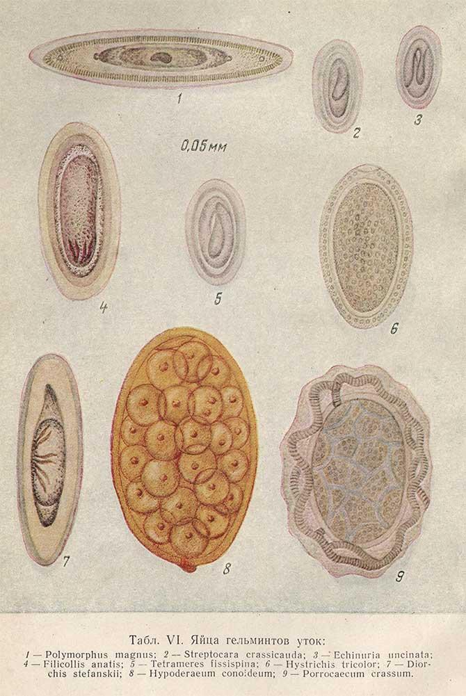Какие паразиты бывают у людей и их симптомы