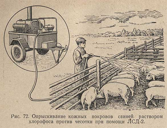 Опрыскивание кожных покровов свиней раствором хлорофоса против чесотки при помощи ЛСД-2